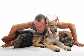 Mythe de la dominance homme chien